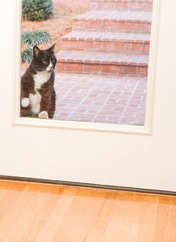 Cat door net
