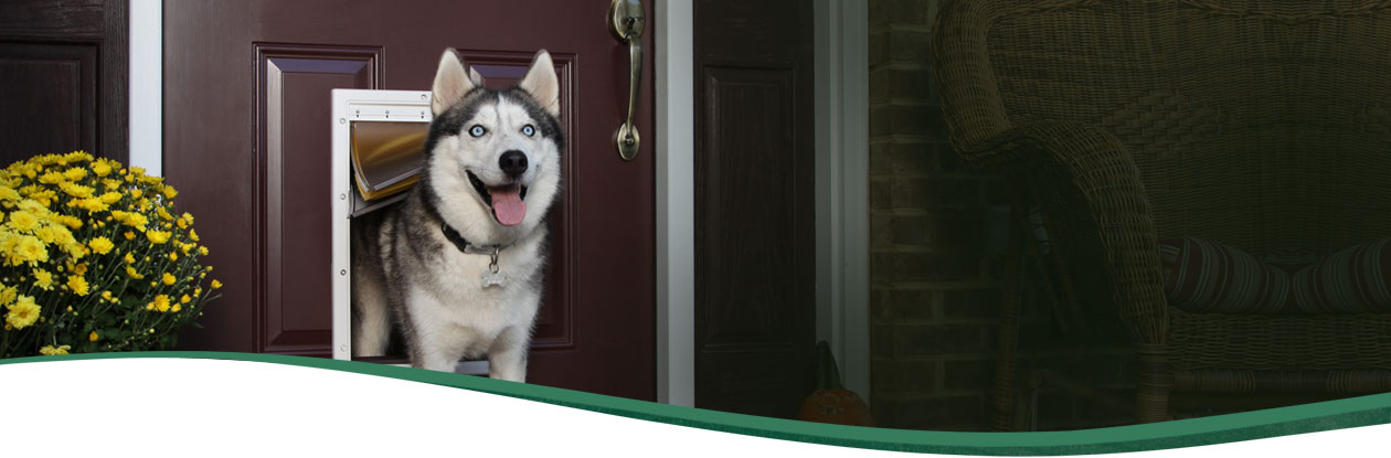 how to install a dog door in a stucco wall 2