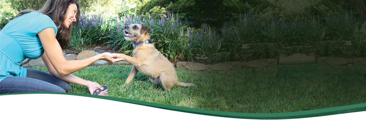 Clicker training clicker dog trainers dog training for Www clickerproducts com