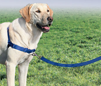 Safe, Veterinarian-Recommended Harnesses & Headcollars