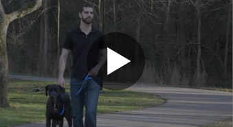 Gentle Leader® Headcollar Training Video