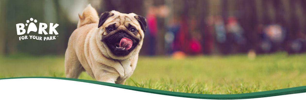 Q Dog Brand PetSafe® Brand...