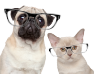 Cat and Dog with glasses