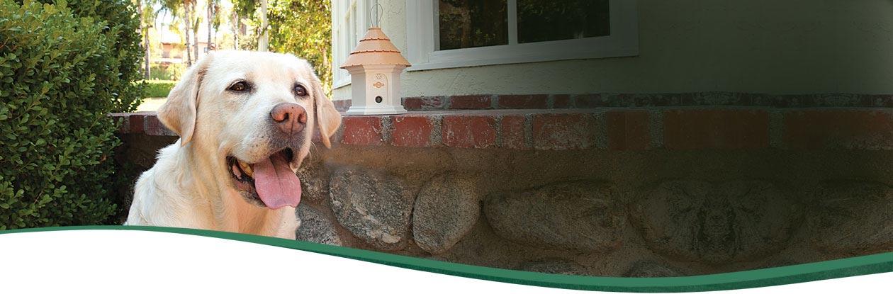 Bark Control   Bark Deterrents   PetSafe