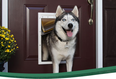 Pet doors to fit any pet door and lifestyle : dogy door - Pezcame.Com