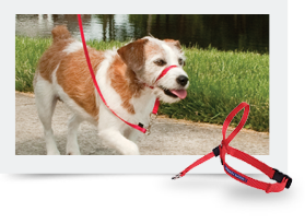 Harnesses, Collars, and Leashes | PetSafe