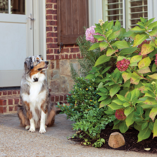 Give Your Pet Safe Boundaries Outside With An Electronic Fence And Keep  Your Pet Away From The Couch, Counter, Pool, Garden, Or Trash.