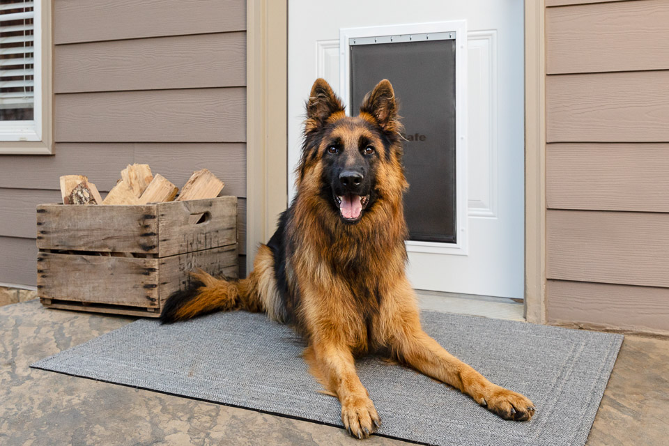 Dog sitting in front of PetSafe door