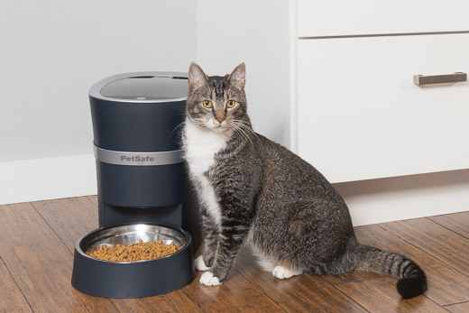 Cat standing beside PetSafe Smart Feed
