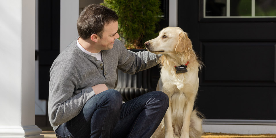 Dog wearing PetSafe collar while sitting with owner