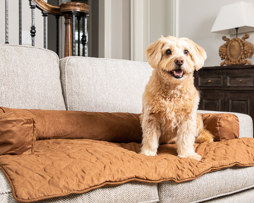 Dog sitting on a furniture protector atop a sofa
