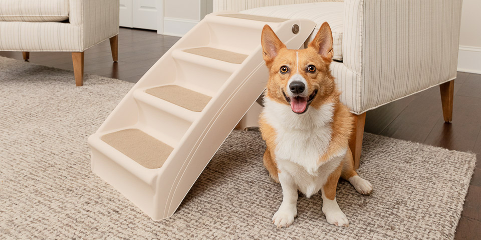 Dog in a living room sitting aside a set of folding steps