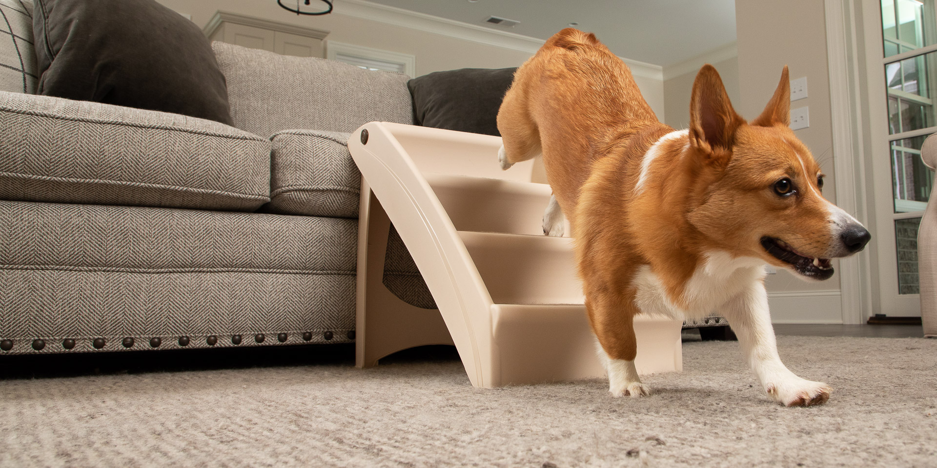 Dog running down a set of folding steps off of a couch