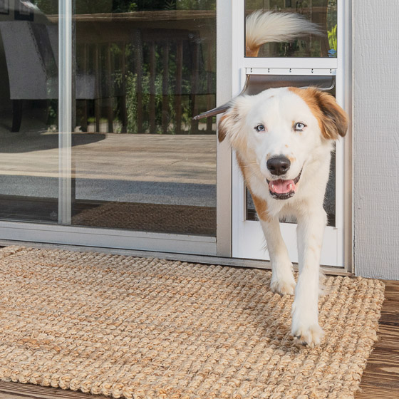 Dog exiting via PetSafe door