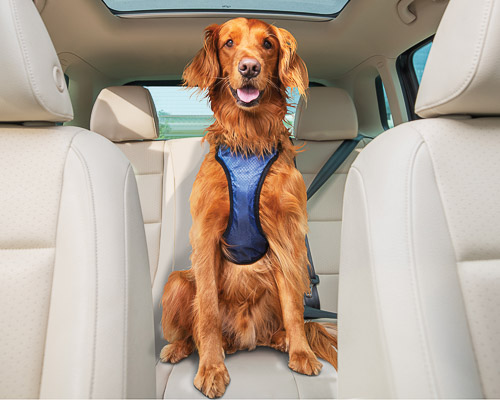 Dog wearing a safety harness in the back seat of an SUV