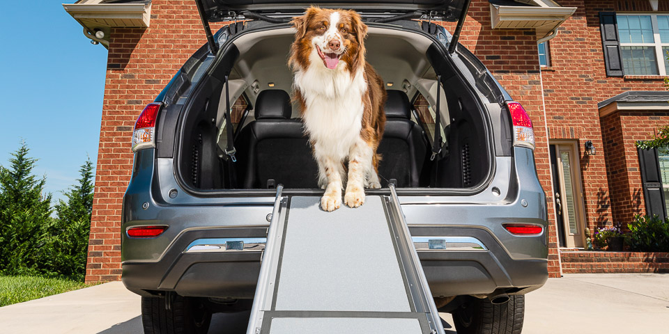 Dog at the top of a travel ramp mounted to the back of a vehicle